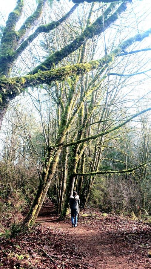 Promenades de forêt photos libres de droits