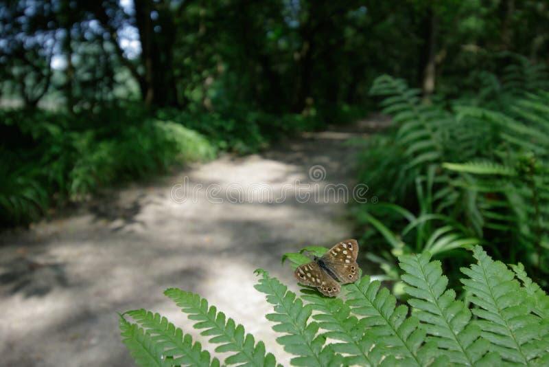 Download Promenades De Région Boisée Photo stock - Image du fougère, papillon: 56486648