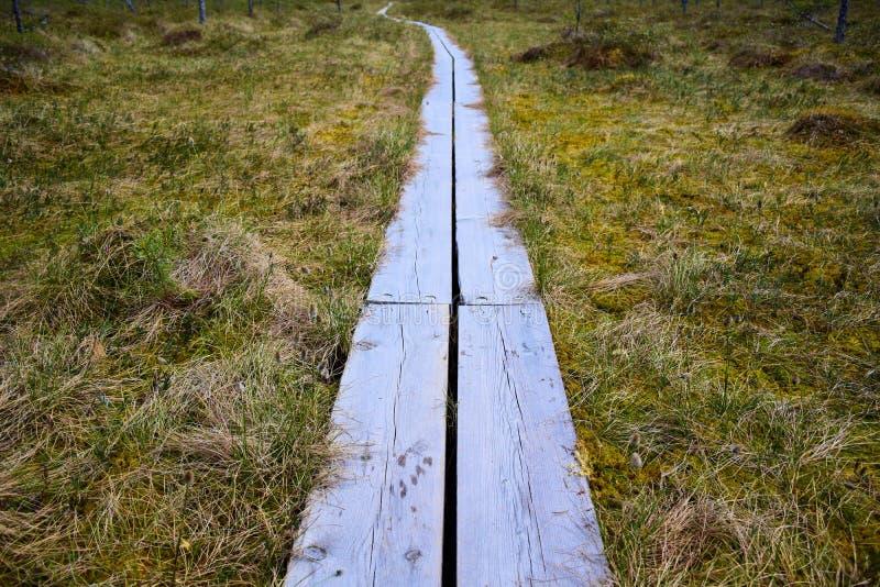Promenades en bois par un marais photo libre de droits