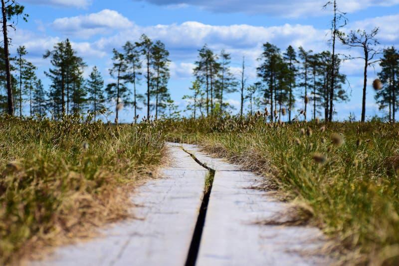 Promenades en bois par un marais photographie stock libre de droits