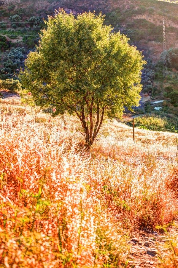 Promień światło łama przez dramatycznego nieba przy zmierzchem i uderza odludnego drzewa na wzgórzu zdjęcia stock
