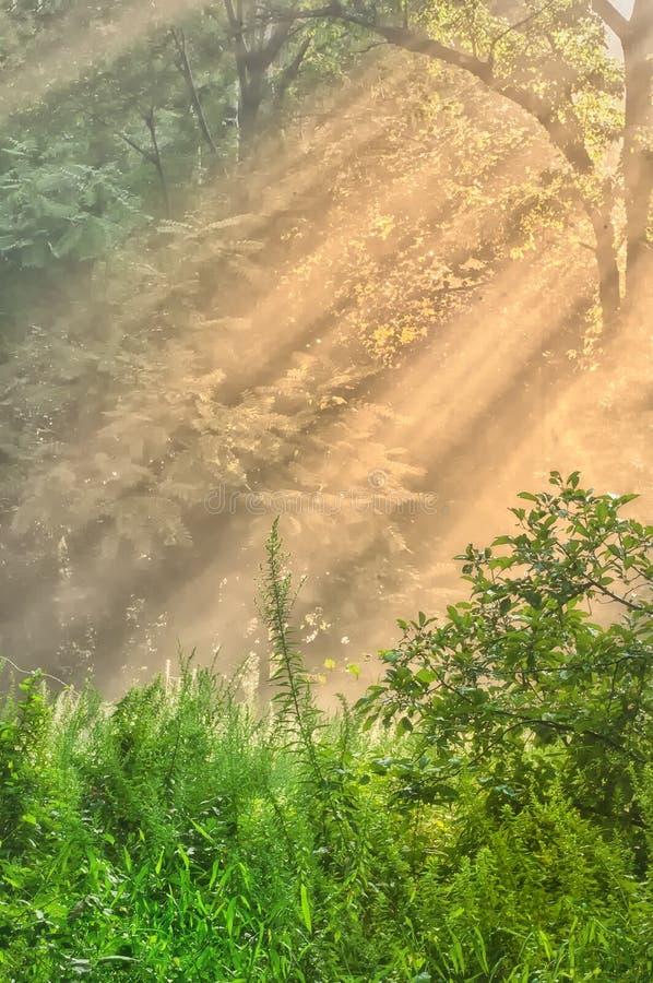 promienia słońce zdjęcie stock