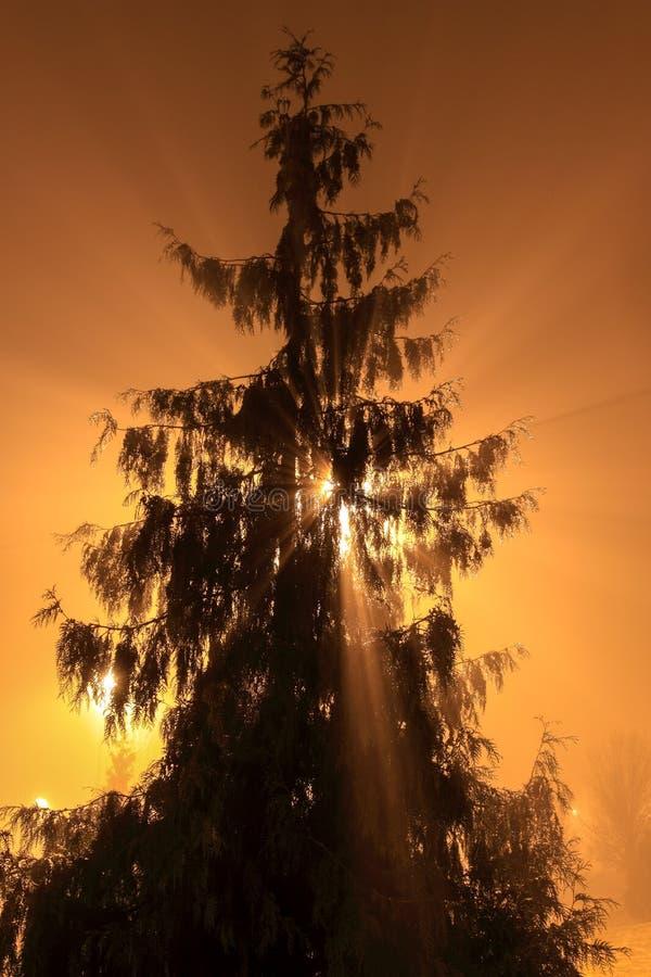 Promienie Å›wiatÅ'o przechodzÄ… chociaż osamotniony trwanie drzewny opóźniony wieczór zdjęcie royalty free