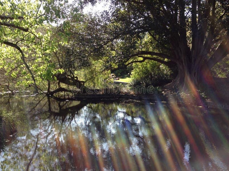 Promienie światło słoneczne przez drzew obrazy stock