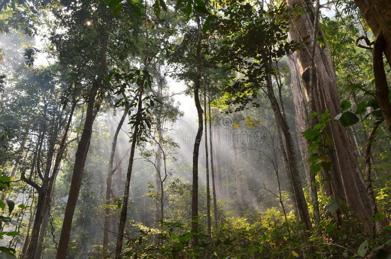 promienieje las słonecznego fotografia stock