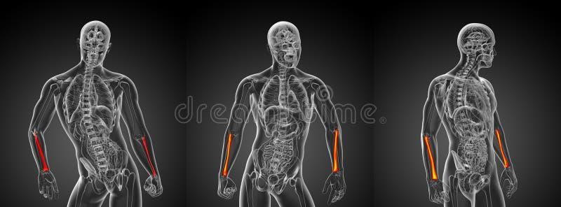 Promieniomierz kość ilustracja wektor
