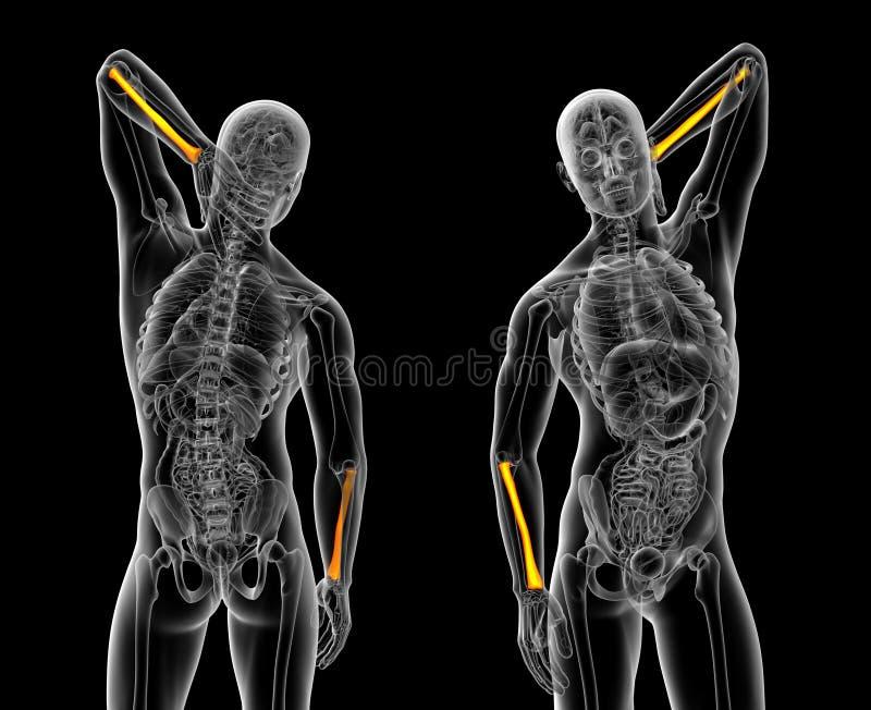 Promieniomierz kość royalty ilustracja