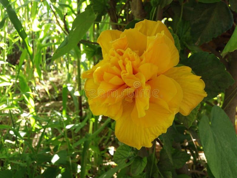 Promieniowanie kwiat obrazy royalty free
