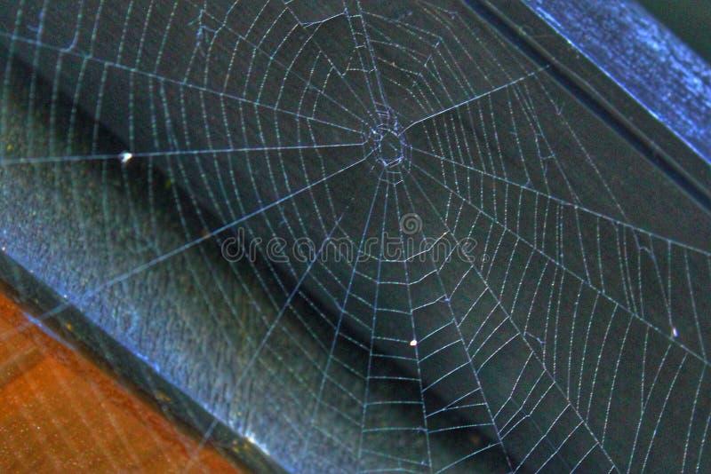 Promieniowe linie pająk sieć bez pająka fotografia royalty free