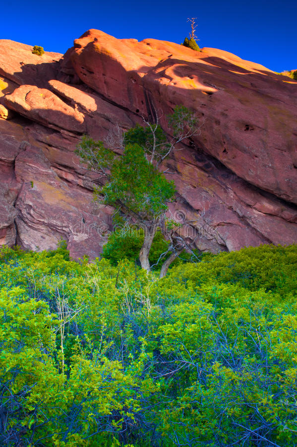 Prominence. Morning light begins to hit the tops of the rock formations at Red Rocks Park in Denver, Colorado as the foliage below shows off it's late spring royalty free stock photos