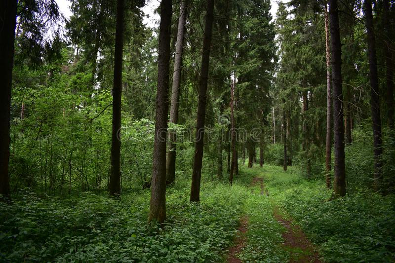 Promising road forest in which some ate a variety of high with bright green royalty free stock photos