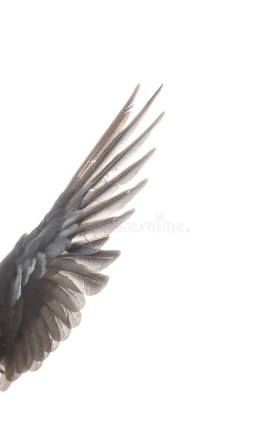 A propagação da asa do pássaro pertence fotos de stock