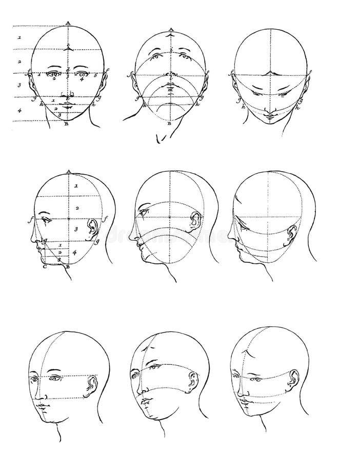 Proporções da cara ilustração stock