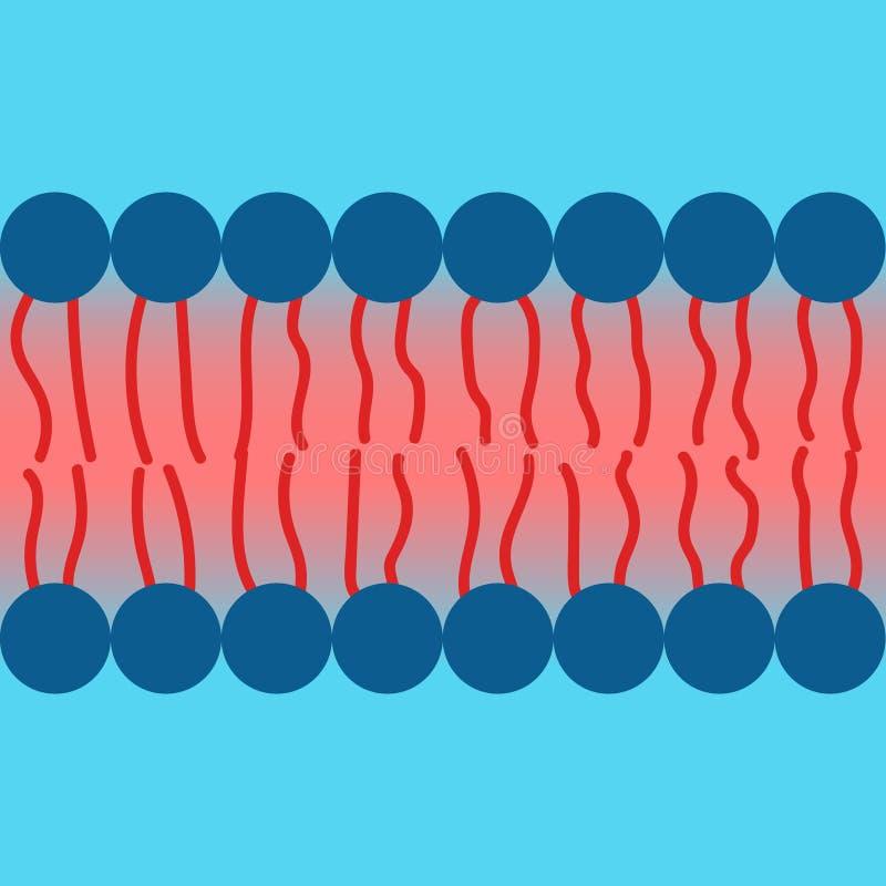 Propriété Amphipatic de membrane cellulaire illustration stock