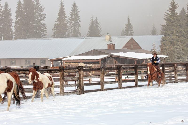 Propriétaire d'un ranch poussant le troupeau de cheval pour faire les foins photos libres de droits