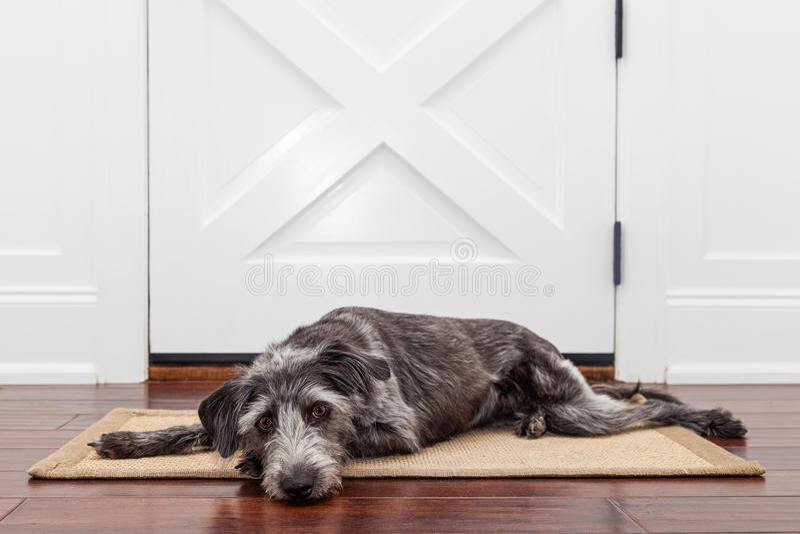 Propriétaire de attente de chien triste photos libres de droits