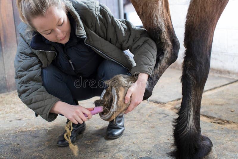 Propriétaire féminin dans les pieds de nettoyage stables du cheval avec la brosse images stock