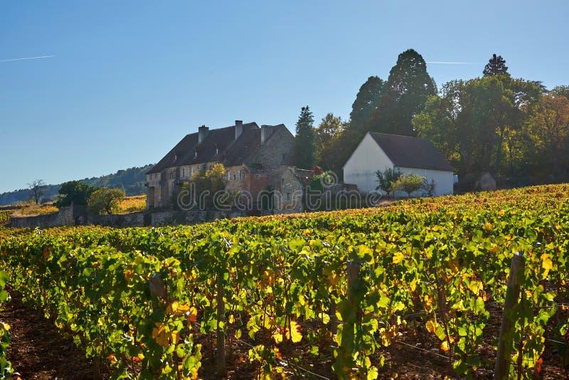 Propriedade do vinho de Borgonha sob um Sun brilhante durante Sunny Autumn D fotografia de stock royalty free
