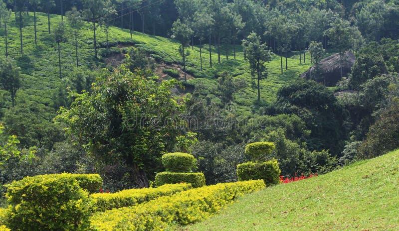 Proprietà del tè con il giardino fotografia stock libera da diritti