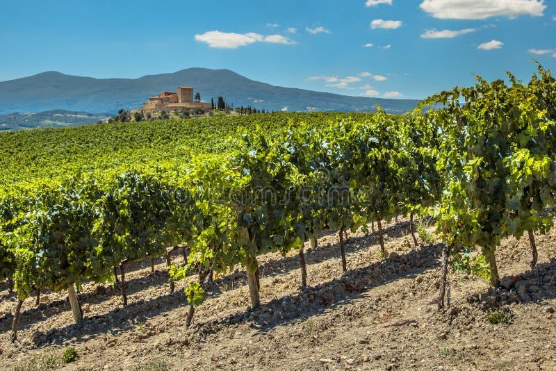 Proprietà del vino con le vigne fotografia stock
