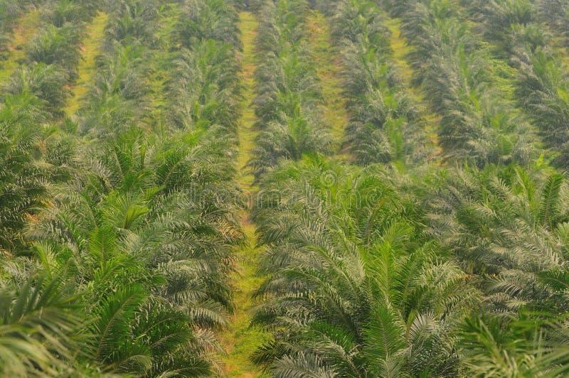 Proprietà della palma da olio fotografia stock libera da diritti