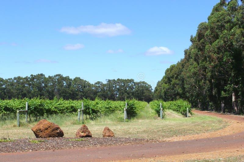 Proprietà della vigna in Margaret River, Australia occidentale immagini stock