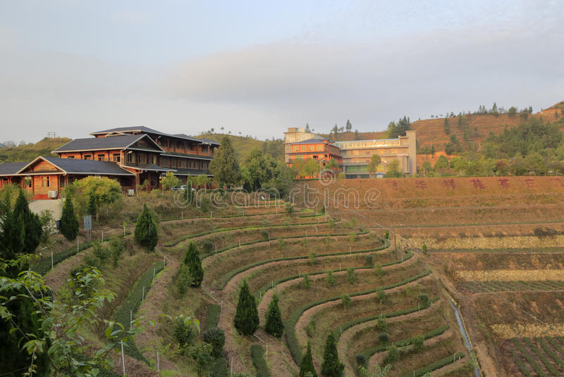 Proprietà terriera organica del tè della società huaxiangyuan immagine stock