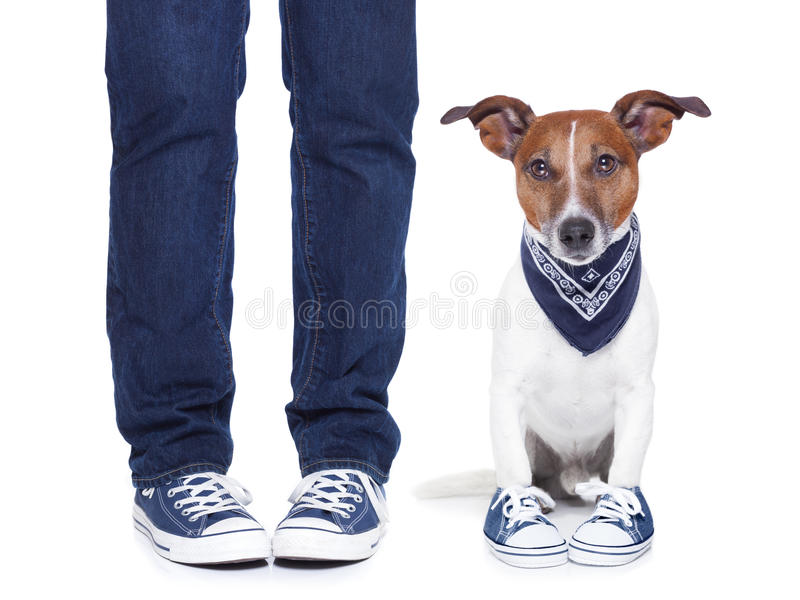 Proprietário do cão e cão fotos de stock