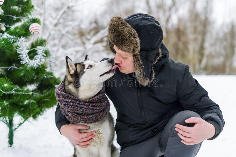 Proprietário e cão de puxar trenós Cão de puxar trenós Siberian que beija um homem na cara no dia de Natal do inverno imagem de stock