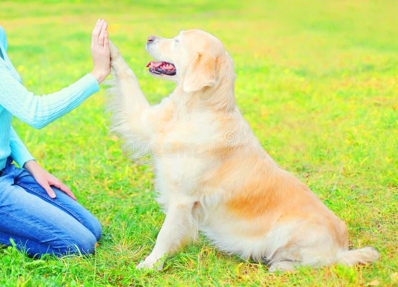 Proprietário que treina seu cão do golden retriever na grama no parque, está dando a pata à mulher foto de stock