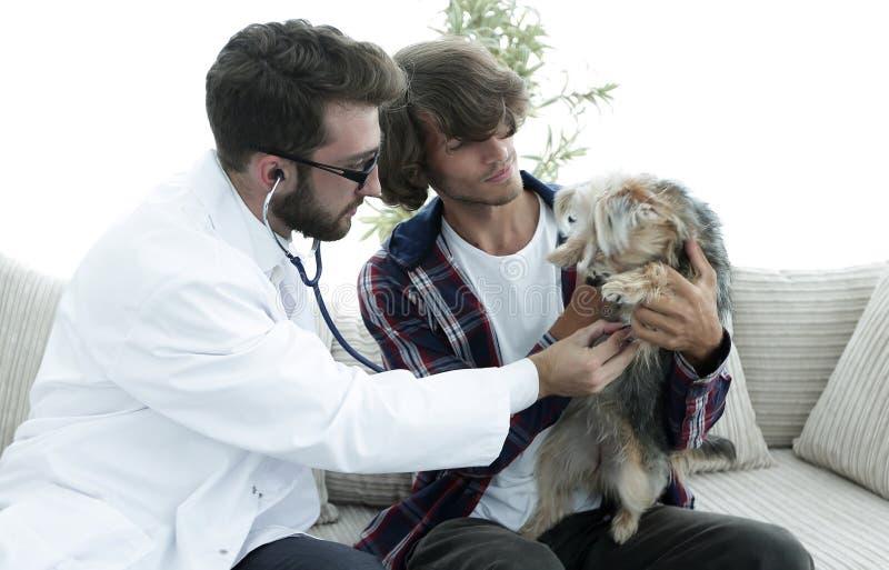 Proprietario amoroso con un Yorkshire terrier nell'ufficio di un veterinario immagine stock libera da diritti