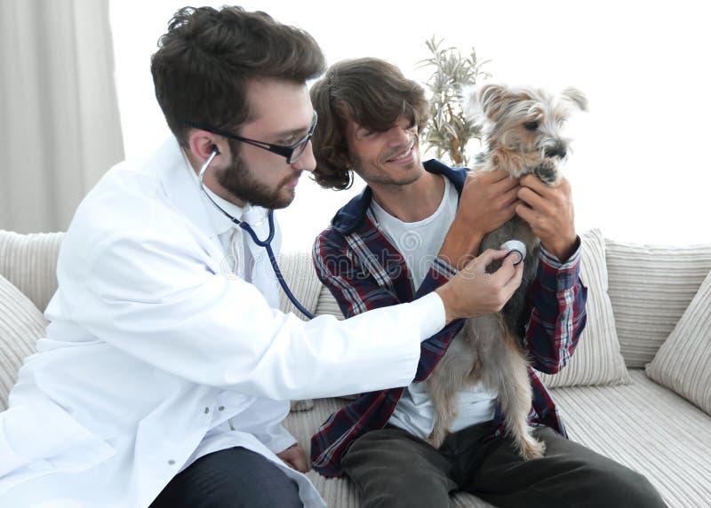 Proprietario amoroso con un Yorkshire terrier nell'ufficio di un veterinario fotografie stock