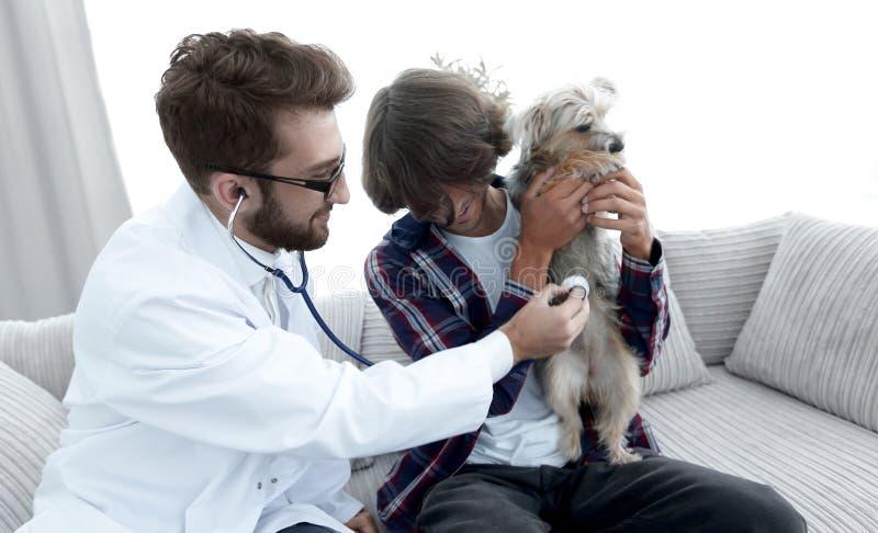 Proprietario amoroso con un Yorkshire terrier nell'ufficio di un veterinario immagini stock