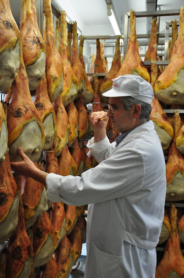 Prosciutto di San Daniele - cured ham production. Traditional raw ham aging by San Daniele, Friuli, Italy. A man smelling a probe to control the aging process stock photo