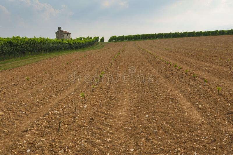 Prosecco hills, view of some new vineyards cultivation from Valdobbiadene, Italy royalty free stock image