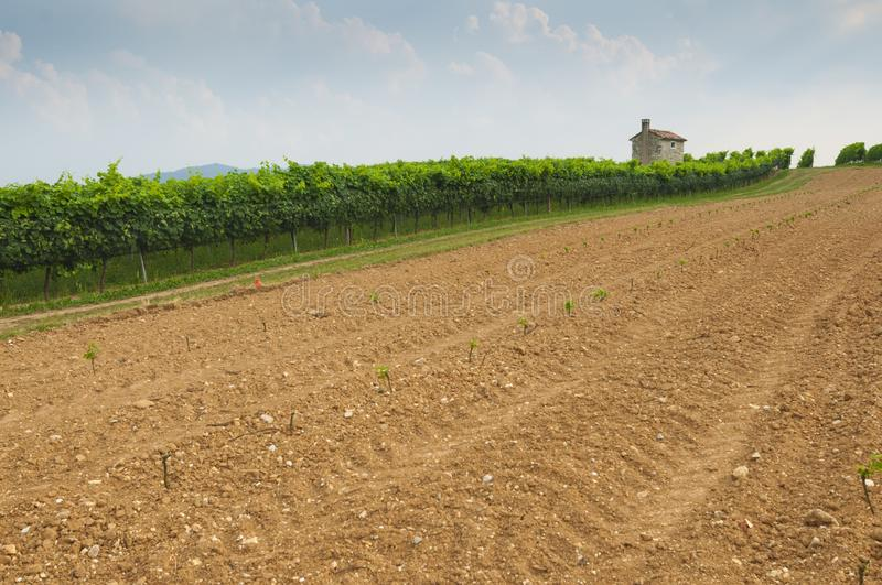 Prosecco hills, view of some new vineyards cultivation from Valdobbiadene, Italy royalty free stock photo