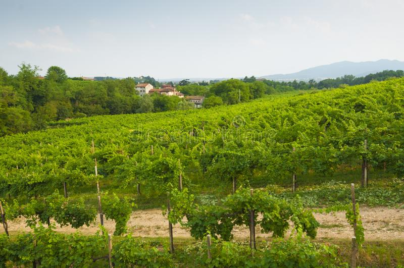 Prosecco hills, view of some vineyards from Valdobbiadene, Italy royalty free stock images