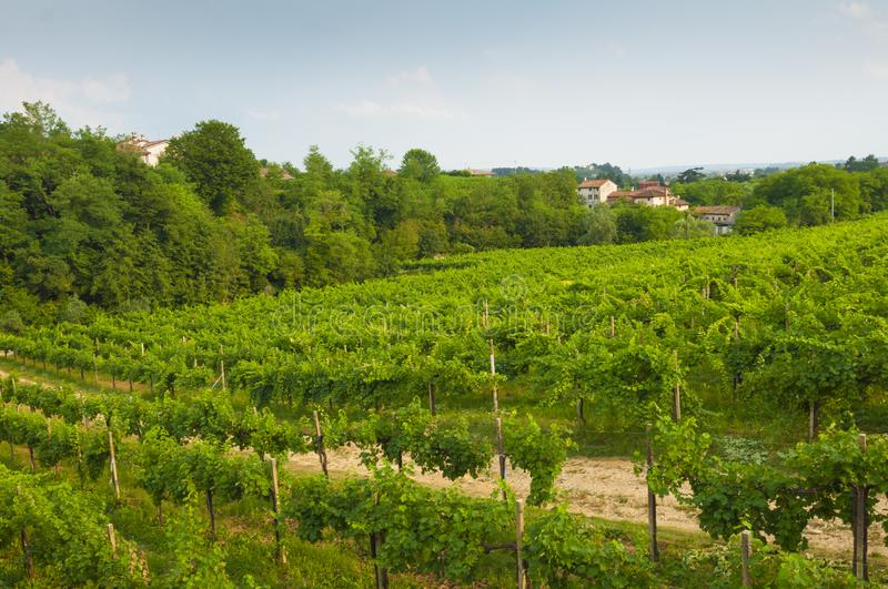 Prosecco hills, view of some vineyards from Valdobbiadene, Italy royalty free stock image