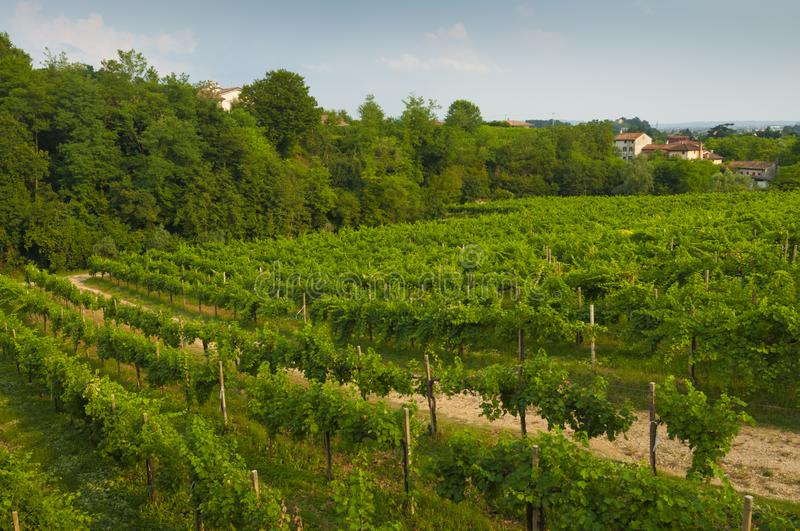 Prosecco hills, view of some vineyards from Valdobbiadene, Italy royalty free stock photography