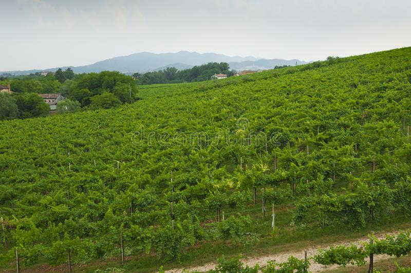 Prosecco hills, view of some vineyards from Valdobbiadene, Italy stock images