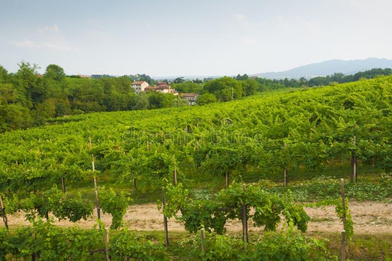 Proseccoheuvels, mening van sommige wijngaarden van Valdobbiadene, Italië royalty-vrije stock afbeeldingen