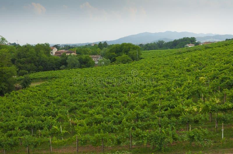 Proseccoheuvels, mening van sommige wijngaarden van Valdobbiadene, Italië royalty-vrije stock foto's