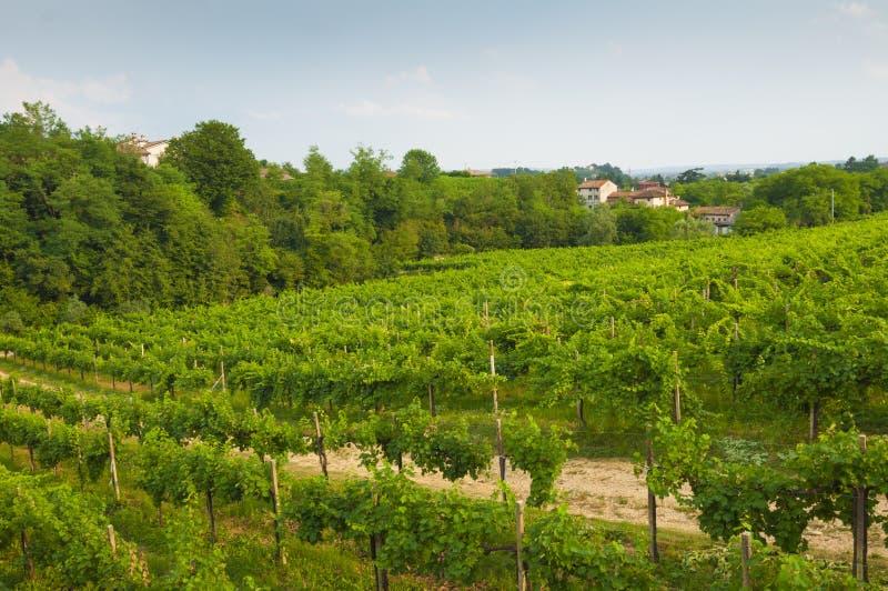Proseccoheuvels, mening van sommige wijngaarden van Valdobbiadene, Italië royalty-vrije stock afbeelding