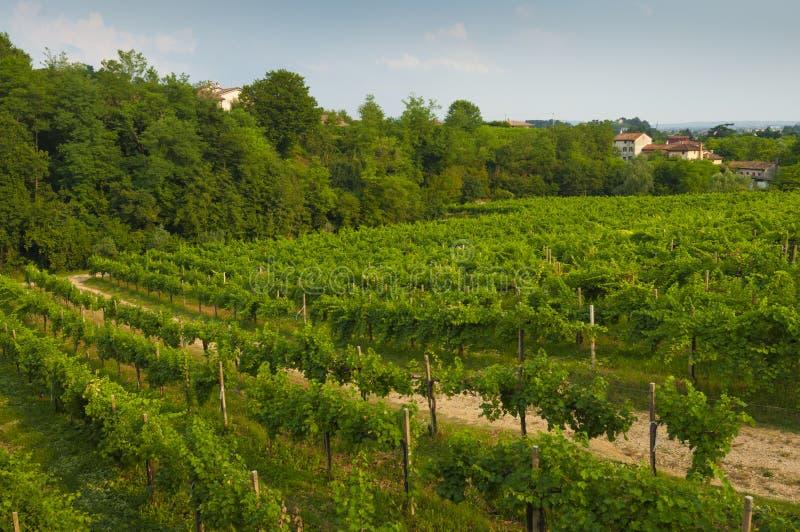 Proseccoheuvels, mening van sommige wijngaarden van Valdobbiadene, Italië royalty-vrije stock fotografie