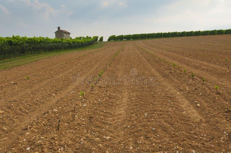 Proseccoheuvels, mening van wat nieuwe wijngaardencultuur van Valdobbiadene, Italië royalty-vrije stock afbeelding