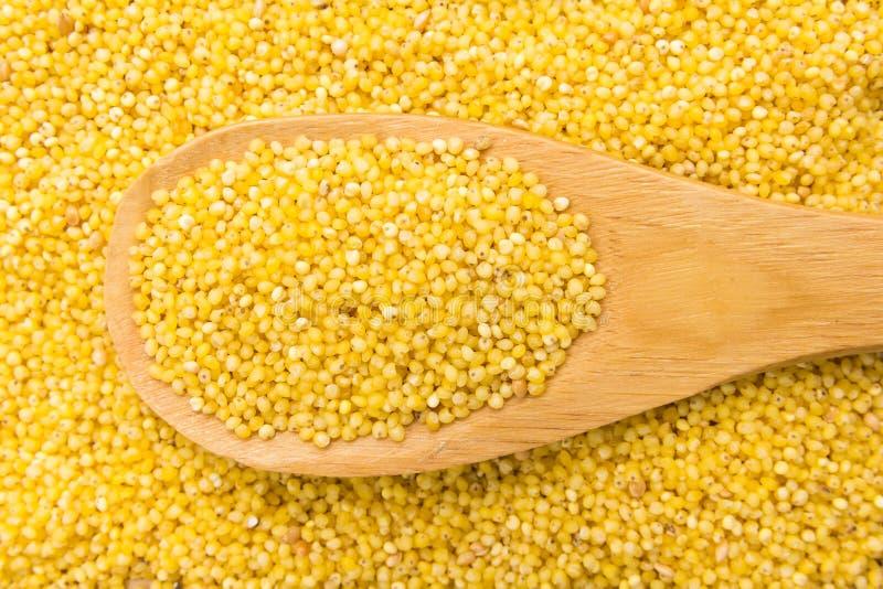 Proso小米谷粒 在木匙子的五谷 关闭 库存图片