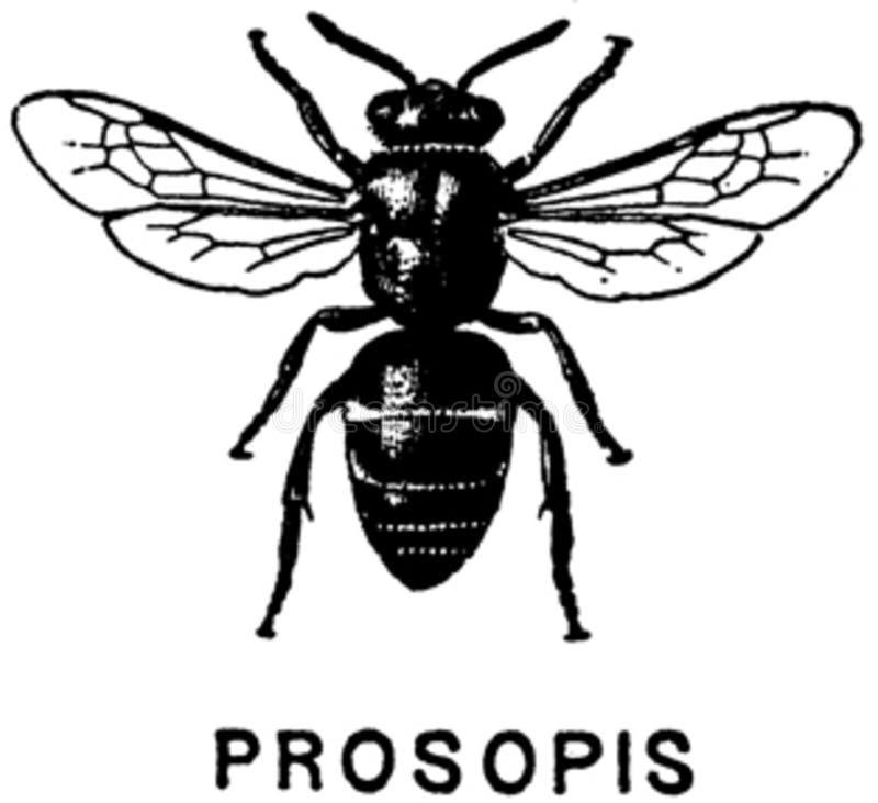 Prosopis-oa Free Public Domain Cc0 Image