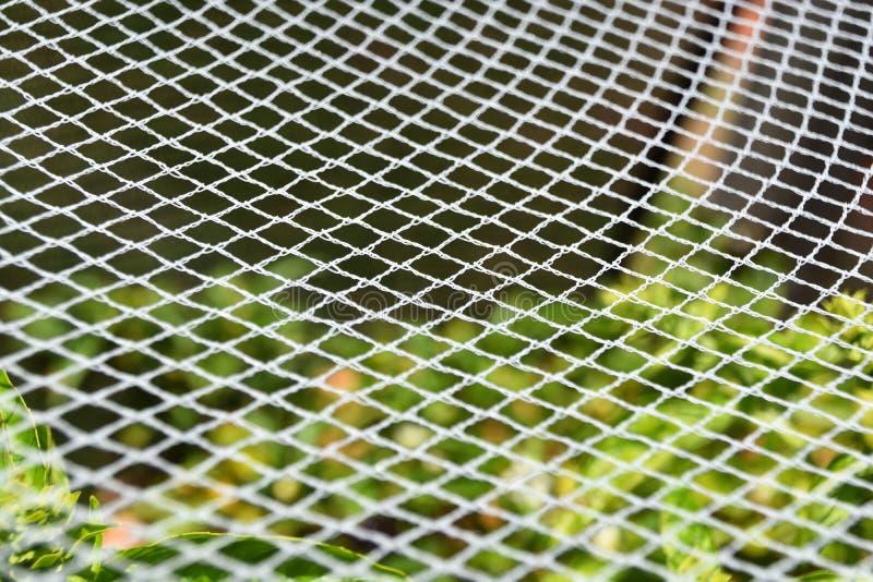 Prospettiva del reticolato del giardino immagine stock