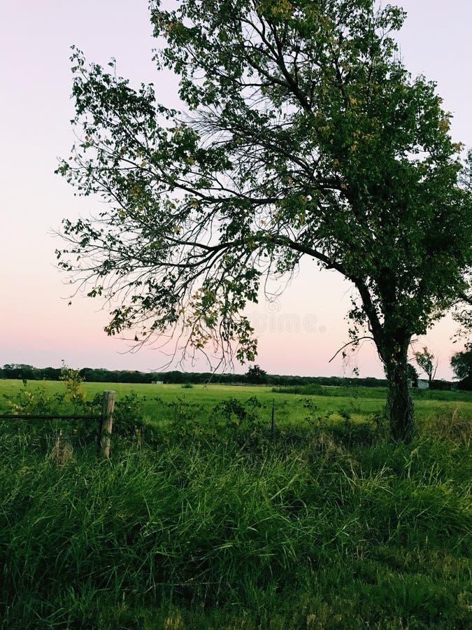 Prospettiva dell'albero fotografia stock libera da diritti