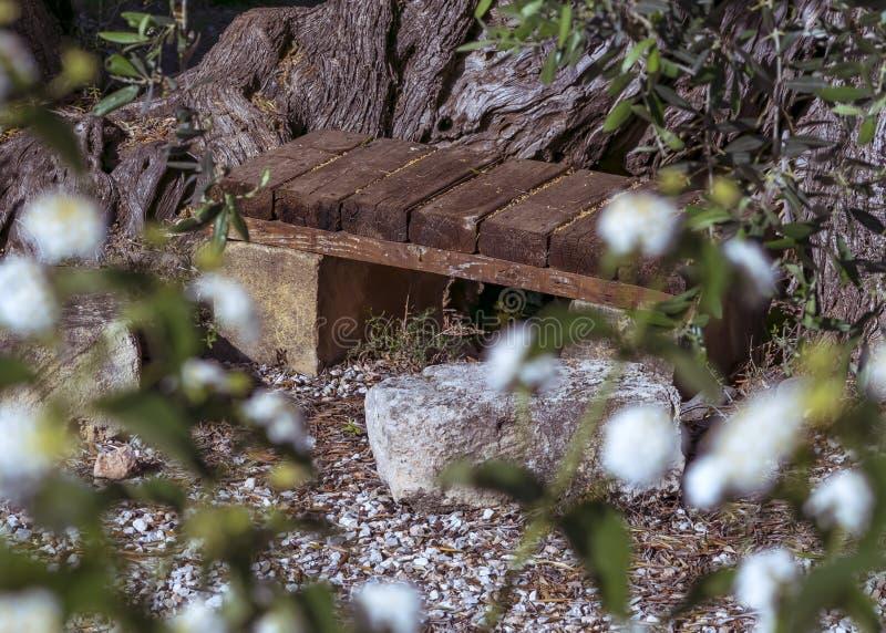 Prosta drewniana ogrodowa ?awka na tle stary drzewo oliwne Lato wiejski krajobraz zdjęcia stock